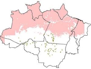 Os pontos amarelos representam as áreas desmatadas; a mancha rosa corresponde ao território encoberto por nuvens, que não pôde ser analisado