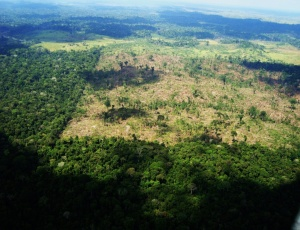 300 hectares de floresta já haviam sido destruídos