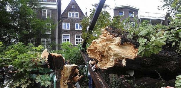 Castanheira que confortou a menina Anne Frank tombou sob ventos e chuvas fortes (23/8/2010) - Evert Elzinga/AP