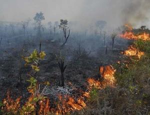 Incêndio destrói vegetação na Chapada dos Veadeiros (GO); veja imagens de queimadas pelo país