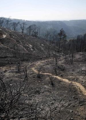 O pior incêndio florestal da história de Israel foi declarado sob controle neste domingo, após 76 horas de combate às chamas