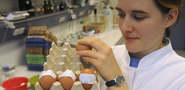 Pesquisadora observa ovos contaminados com dioxina; 4.700 fazendas foram fechadas