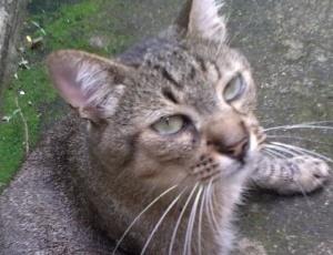 Pesquisador busca seu gato de estimação que desapareceu no aeroporto de Brasília