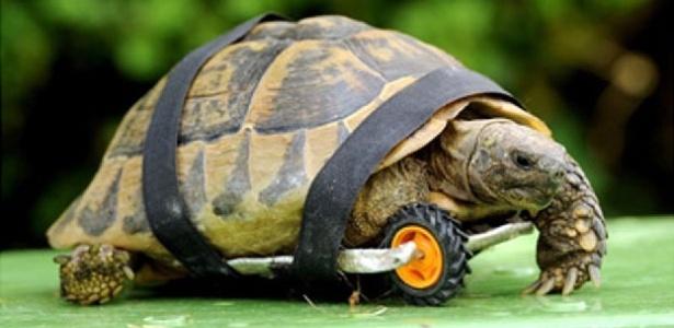 Tuly agora é a mais rápida da turma com essa rodinha adaptada por seu dono - Reprodução/Orange.co.uK