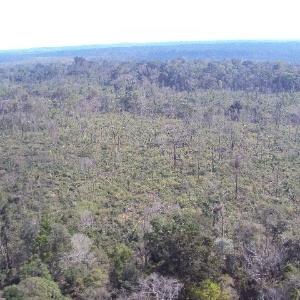 Imagem divulgada pelo Ibama mostra área desmatada em Rondônia; o órgão abriu cinco frentes de combate ao desmatamento no Estado