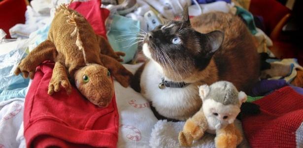 """Dusty, """"o gato cleptomaníaco"""", descansa em meio a alguns dos objetos que ele trouxe para casa"""