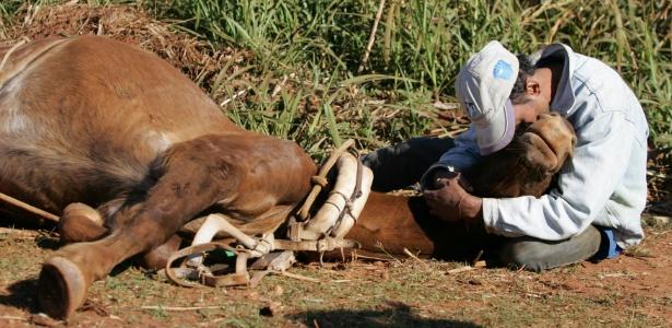 Cristiano abraça égua Estrela minutos antes da morte do animal, atropelado em rodovia em SP