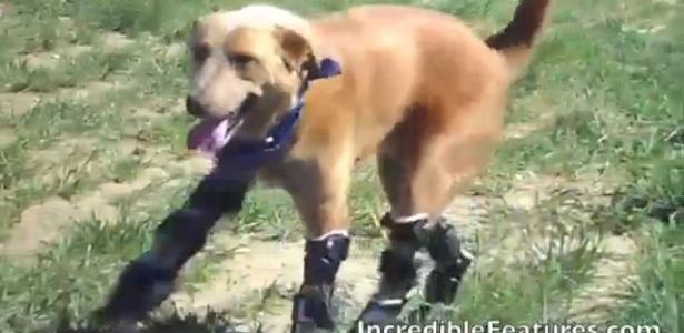 Naki'o agora pula, brinca, canta, nada e pinta o sete com suas novas patas biônicas