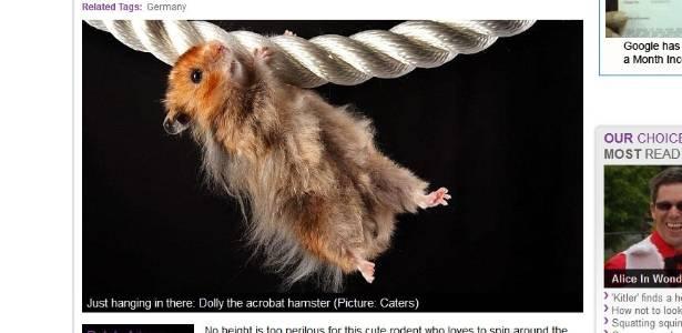 Dolly pareceu querer mostrar que era capaz de sair de sua rotina comer-rodar-comer-dormir - Reprodução/Metro.co.uk