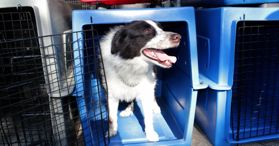 Cão é transportado em kennel (gaiola) durante viagem de avião