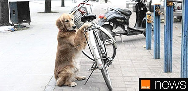 Além de fiéis, cãezinhos como o Li Li também são pra lá de fofos - Reprodução/Orange News