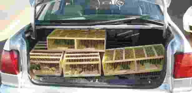 Porta-malas de carro transportava pássaros-pretos ilegalmente em Igarapava (SP) - Divulgação / Polícia Militar Ambiental