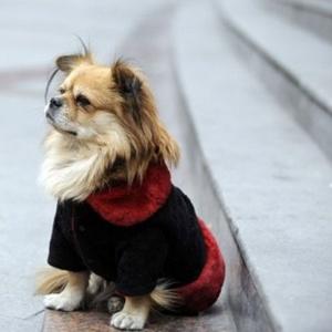 O cão Wang Cai esperando o dono, na China