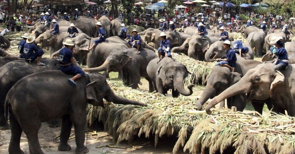 Elefantes comem frutas durante cerimônia que marca o Dia do Elefante, em Chiang Mai, na Tailândia