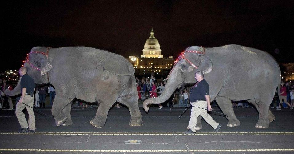 Elefantes de circo caminham em frente ao Capitólio, nos Estados Unidos, durante desfile