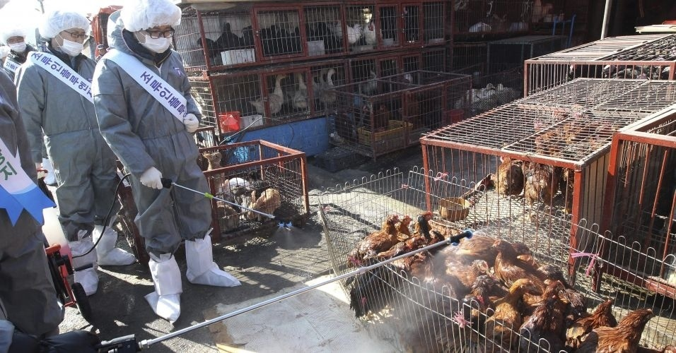 Equipe desinfeta mercado de animais vivos na cidade de Seongnam, na Coreia do Sul