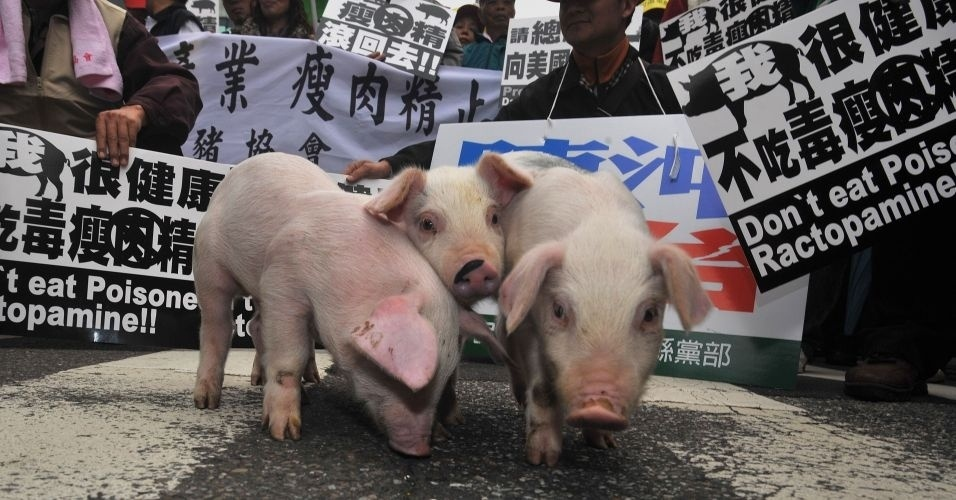 Fazendeiros levam porcos e cartazes a protesto em frente ao Parlamento de Taiwan