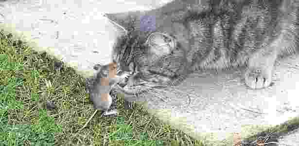 Tom e Jerry da vida real se confrontam no jardim de Stephanie, no Reino Unido - Reprodução