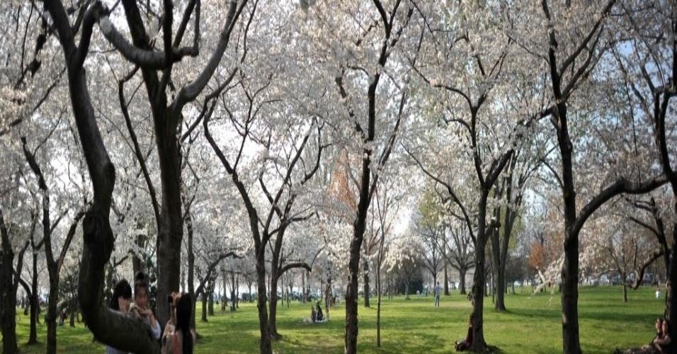 Turistas japonesas tiram foto perto de cerejeiras floridas em parque próximo a Washington (EUA)