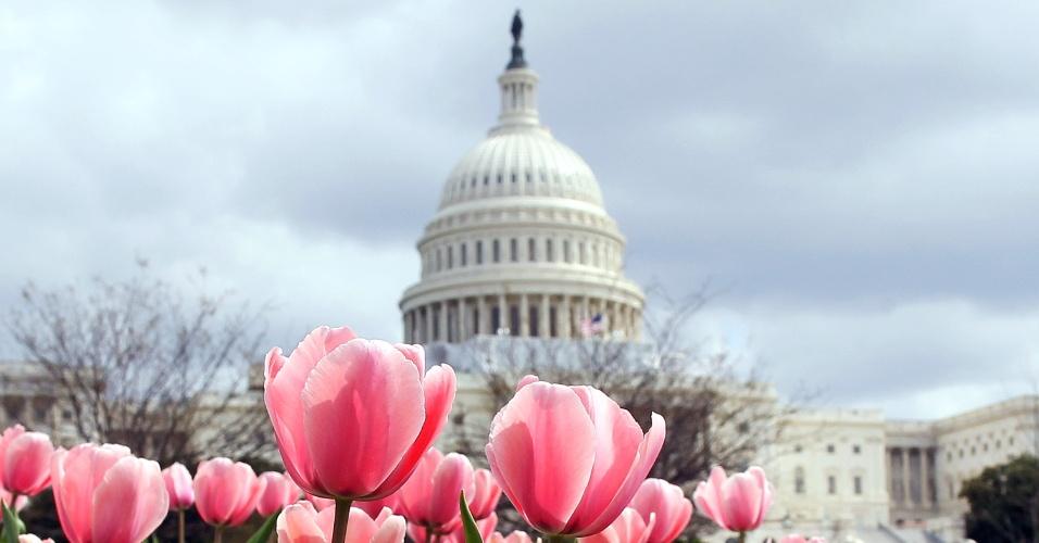 Calor favorece o crescimento antecipado das flores e das cerejeiras características da primavera norte-americana em Washington (EUA)
