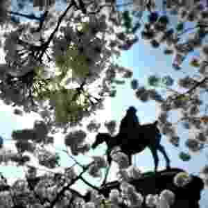 Flores de cerejeiras começam a desabrochar em Washington, nos Estados Unidos. Ao fundo, estátua de Winfield Scott (1786 ? 1866). Este ano fazem 100 anos que o Japão deu a flor de presente aos EUA - Miladen Antonov/AFP