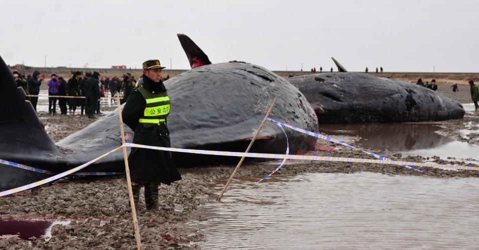 Soldado mantém guarda em frente a quatro baleias que amanheceram mortas na costa de Yancheng, província de Jiangsu, na China