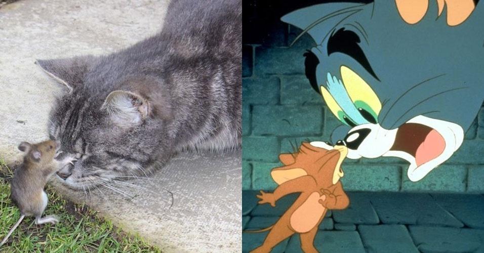 A inglesa Stephanie Evans, 41, lembrou da dupla do desenho animado Tom e Jerry ao presenciar uma cena digna do programa entre seu gato de 1 ano e meio e um rato no jardim de seua casa