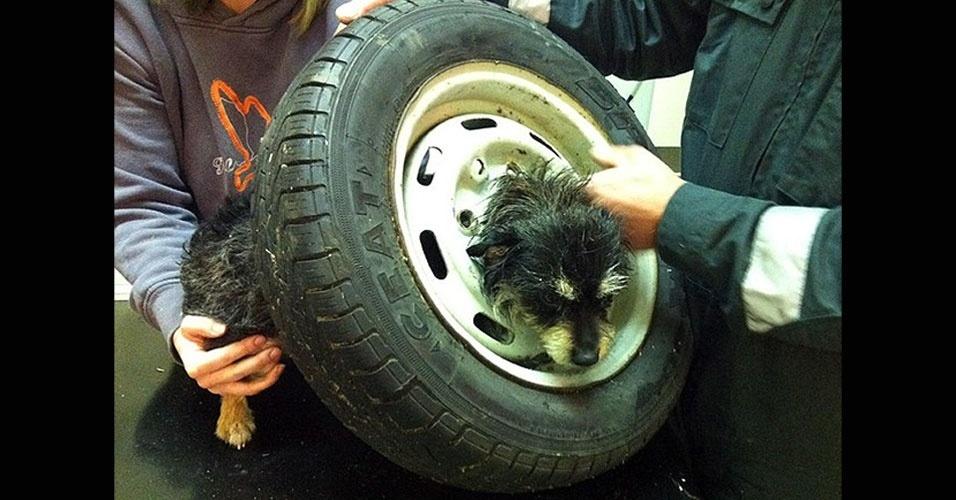 Bombeiros tentam ajudar cadelinha Tinks, da raça terrier, que ficou com a cabeça presa em uma roda de carro no vilarejo de Church Crookham, em Hampshire (Reino Unido). Ela estava muito agitada e assustada, e teve de ser sedada para que os bombeiros conseguissem removê-la em segurança