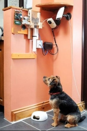 Como passa muito tempo fora de casa e nem sempre consegue alimentar seu cãozinho Toby, o inglês Nat Morris, 30, criou um sistema eletrônico para alimentar o border terrier de qualquer parte do mundo. Ele envia uma mensagem para a conta @FeddToby no Twitter e a ração cai direto na tigela do cão