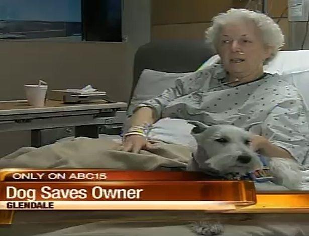 Danny é praticamente um cão superdotado. Ao perceber que sua dona, Bethe Bennett, moradora de Glendale, no Arizona (EUA), havia desmaiado, ele lambeu seu rosto até acordá-la. Depois, sob ordens, foi buscar o telefone para Bethe chamar uma ambulância