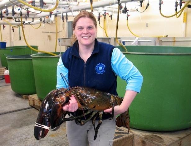 Daria um belo ensopado, mas vai ficar vivinho! A diretora do aquário estadual do Maine, Aimee-Hayden-Rodriques, mostra uma lagosta de 12 quilos e um metro de comprimento pescada na costa do Maine (EUA). O aquário batizou o crustáceo de Rocky