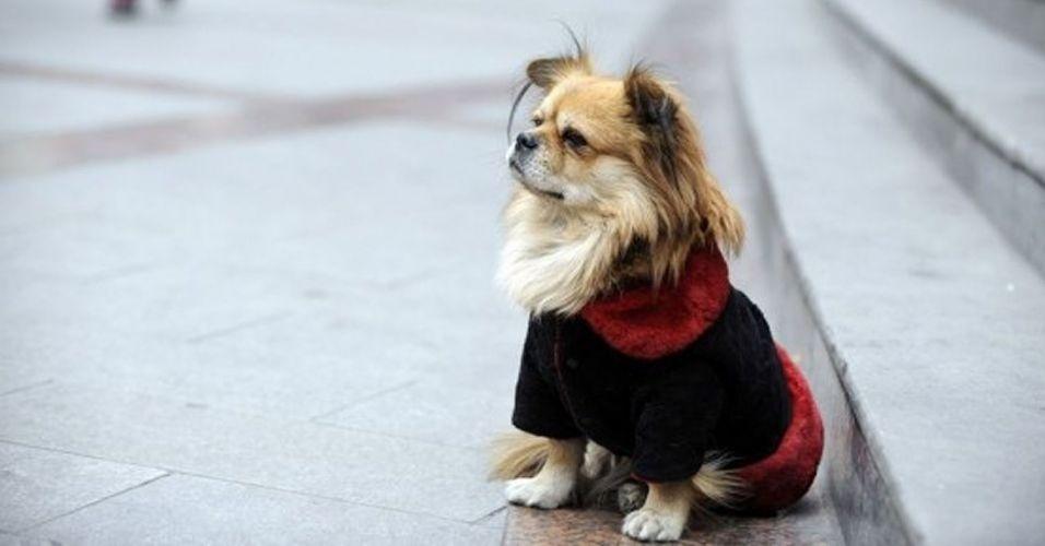 Durante os últimos quatro anos, o cãozinho Wang Cai tem passado 8 horas de seu dia esperando seu dono sair do trabalho na China. Ele se posta em frente à escadaria do banco Minsheng das 9h às 17h e não deixa que nada distraia seu foco