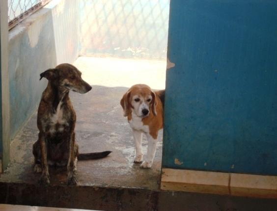 Família registra boletim de ocorrência contra o Centro de Controle de Zoonoses de Araraquara, em São Paulo, por ter sacrificado um cão Beagle