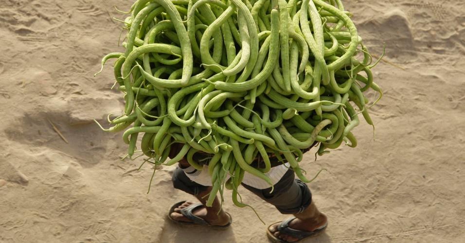 Fazendeiro carrega pepinos a caminho de mercado da cidade de Allahabad, na Índia