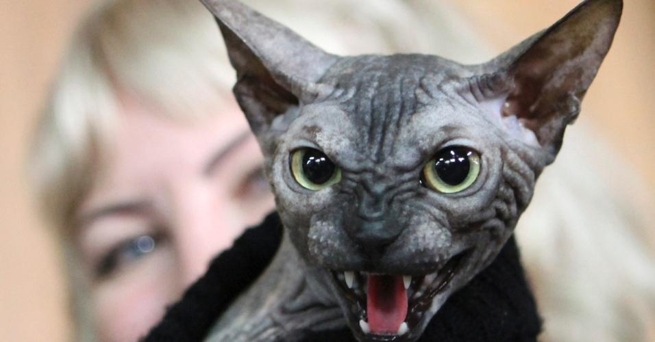 Gato com cara de mau rouba atenção em exposição de gatos no Quirguistão
