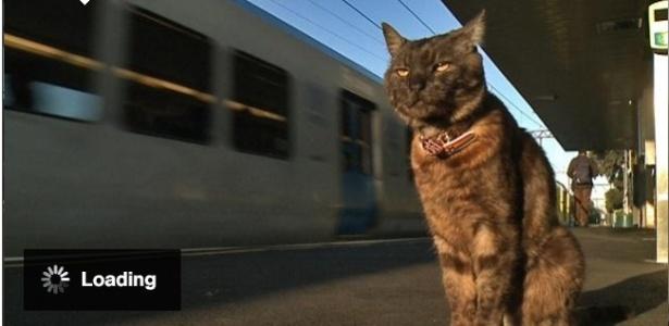 Gato espera dona na estação de trem todos os dias