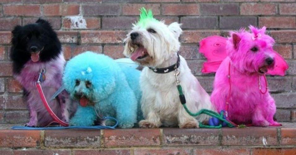 Inglesa pinta o pelo de seus cães para homenagear estrelas de reality show e causa polêmica em sua cidade, no Reino Unido