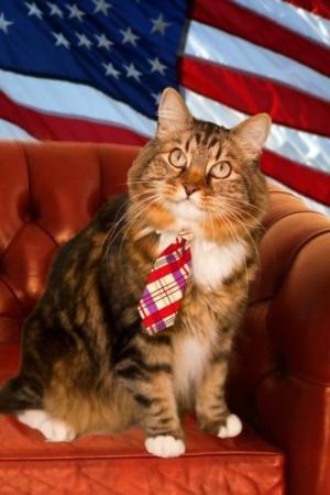 """O gato Hank decidiu virar político e quer uma vaga no Senado americano, pelo Estado da Virgínia. O felino afirma conhecer bem os problemas da população, afinal, já morou na rua. Seu lema de campanha é """"leite em todas as tigelas"""". Sua campanha já conta com página no Facebook e no Twitter. Além disso, Hank já tem uma série de apoiadores e correligionários e já arrecadou US$ 250"""