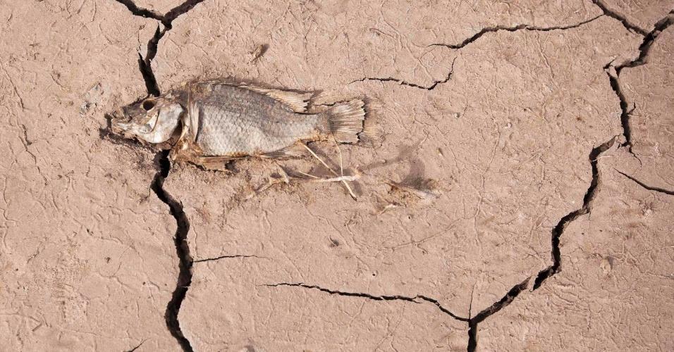 Peixe seco nas ilhas Canárias