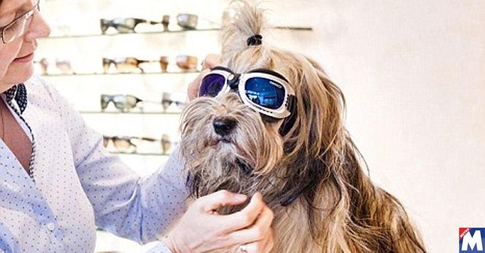 Uma ótica começou a vender óculos de sol especiais para cães e está fazendo um tremendo sucesso na Alemanha