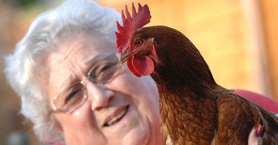 """Uma senhora de 79 anos contou ao """"The Sun"""" que sua galinha Gertie agora é o galo Bertie. Ela notou algo estranho quando a então Gertie começou a andar de maneira diferente de suas outras duas galinhas, Daisy e Gracie. É, pelo visto tem galinha por aí cantando de galo. Literalmente"""