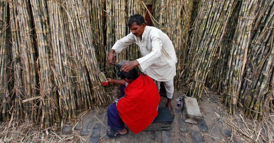 Homem corta o cabelo no meio de plantação de cana-de-açucar em Kolkata, na Índia, nesta sexta-feira (23)