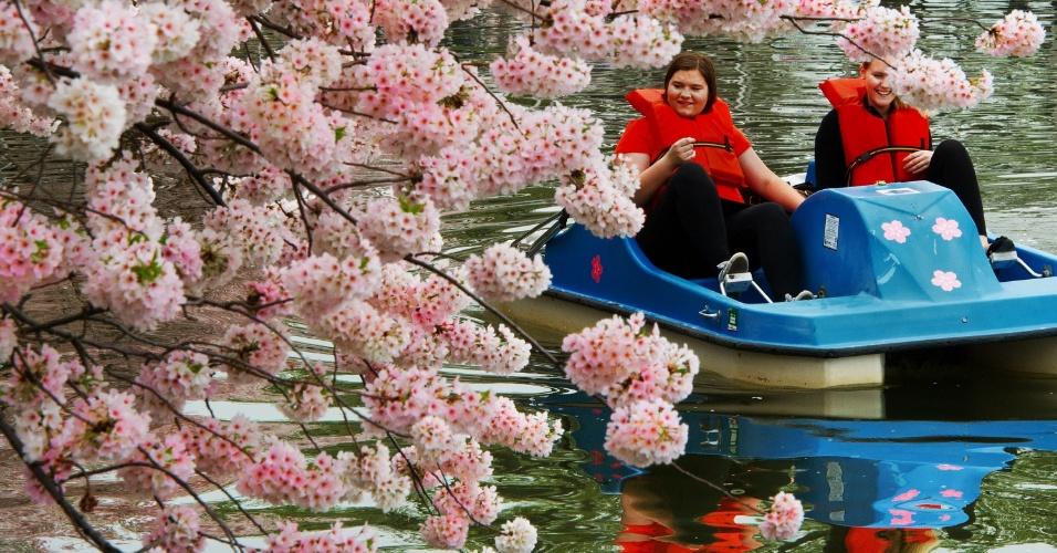 Mulheres passeiam de pedalinho em Tidal Basin, enseada do rio Potomac em Washington, nos Estados Unidos. Quinta-feira (22) aconteceu o festival das Cerejeiras em Flor, que marcou o centésimo aniversário da chegada das cerejeiras ao país. As primeiras árvores foram presentes do Japão