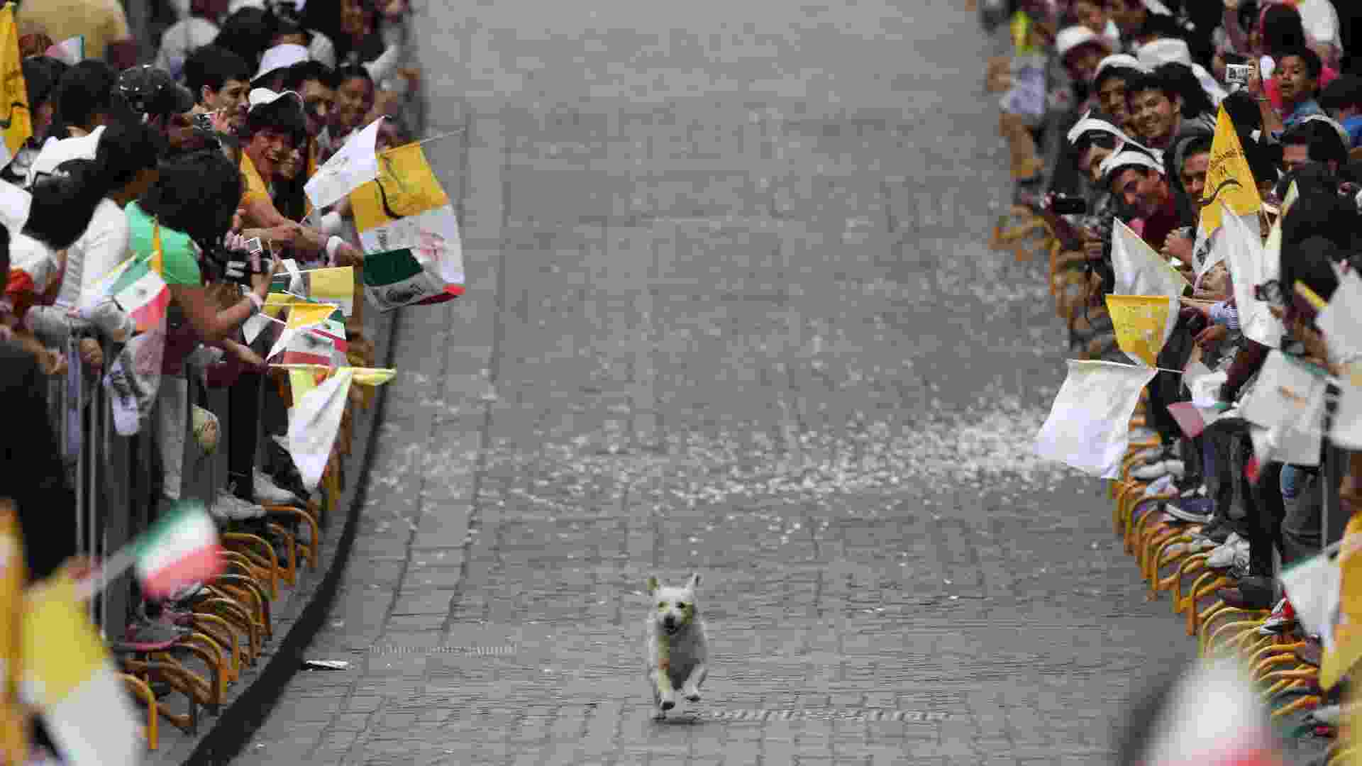 Cachorro chama atenção dos fiéis que aguardavam a chegada do papa Bento 16 na Praça da Paz, na cidade mexicana de Guanajuato, ao percorrer o caminho reservado para a passagem do pontífice a bordo do papamóvel - Alexandre Meneghini/AP