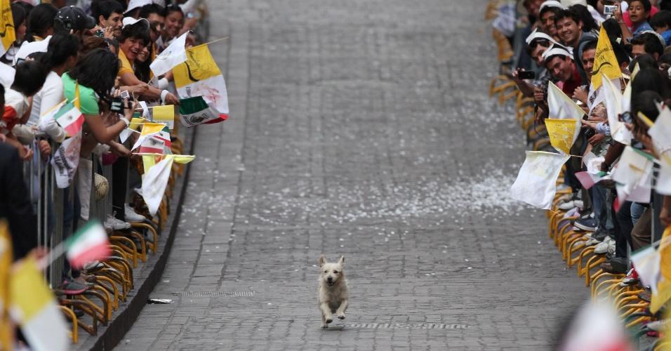 Cachorro chama atenção dos fiéis que aguardavam a chegada do papa Bento 16 na Praça da Paz, na cidade mexicana de Guanajuato, ao percorrer o caminho reservado para a passagem do pontífice a bordo do papamóvel