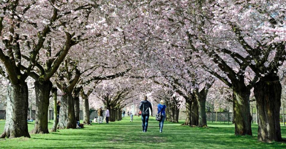 Alemães caminham embaixo de árvores floridas em jardim na cidade de Schwetzingen, no sudoeste da Alemanha