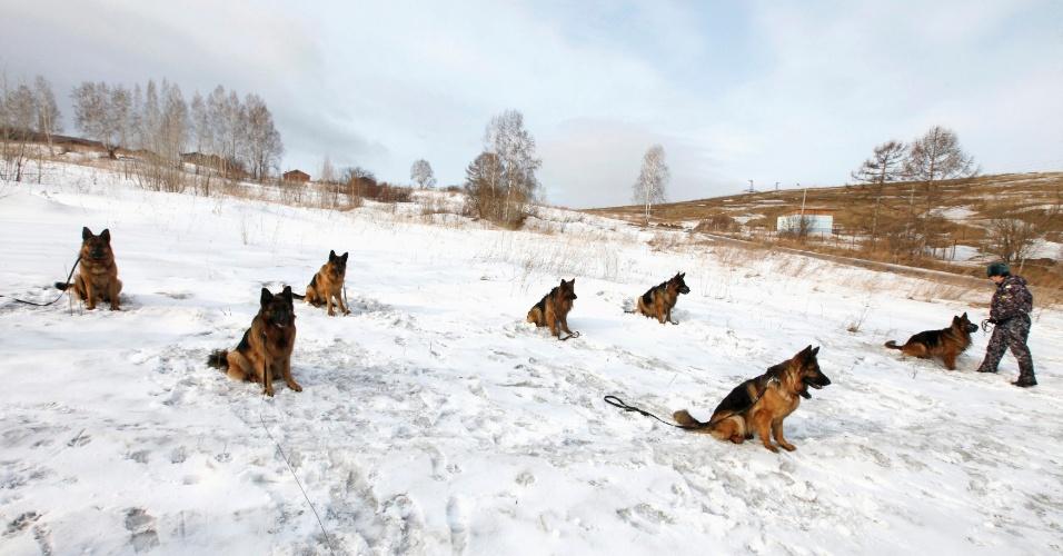 Pastores alemães são testados em curso de formação geral de centro policial na cidade siberiana de Krasnoyarsk, na Rússia
