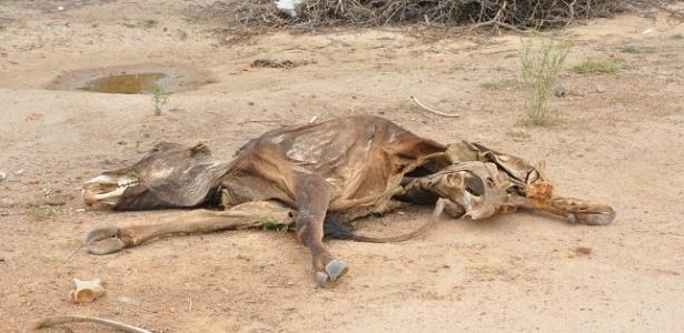 Seca castiga o Nordeste; na imagem, animal morto é visto na cidade baiana de Senhor do Bonfim