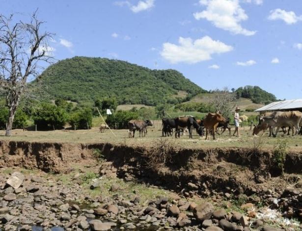 A estiagem provoca prejuízos em vários municípios gaúchos. A falta de chuva no Rio Grande do Sul já afeta mais de 302 mil pessoas neste início de ano