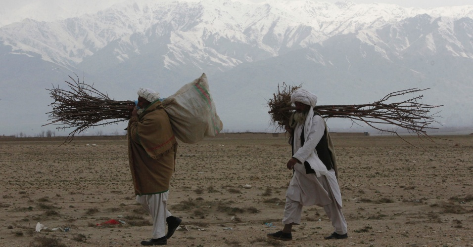 Homens carregam árvores frutíferas em Bagram, no norte do Afeganistão